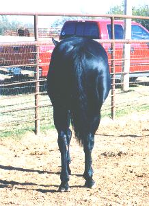 All Night High - Barrel Horse Sire