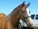 2006 Filly by Verily Sixes