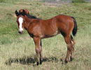 Daisys 2008 filly