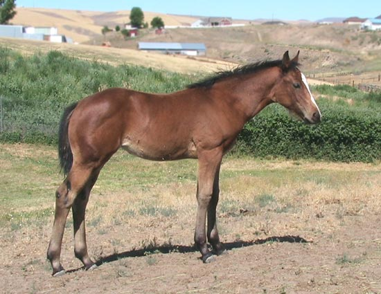 Daisy's 2008 Fire Water Magic Filly