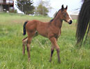 Daisys 2008 filly 2 wk