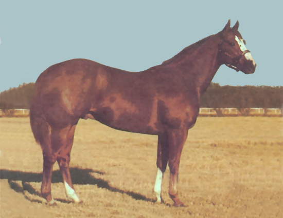 Packin Sixes, Barrel Horse Sire