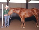 Cowgirl In The Money, April, 2004