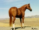 Verily Sixes Stallion 2 years old